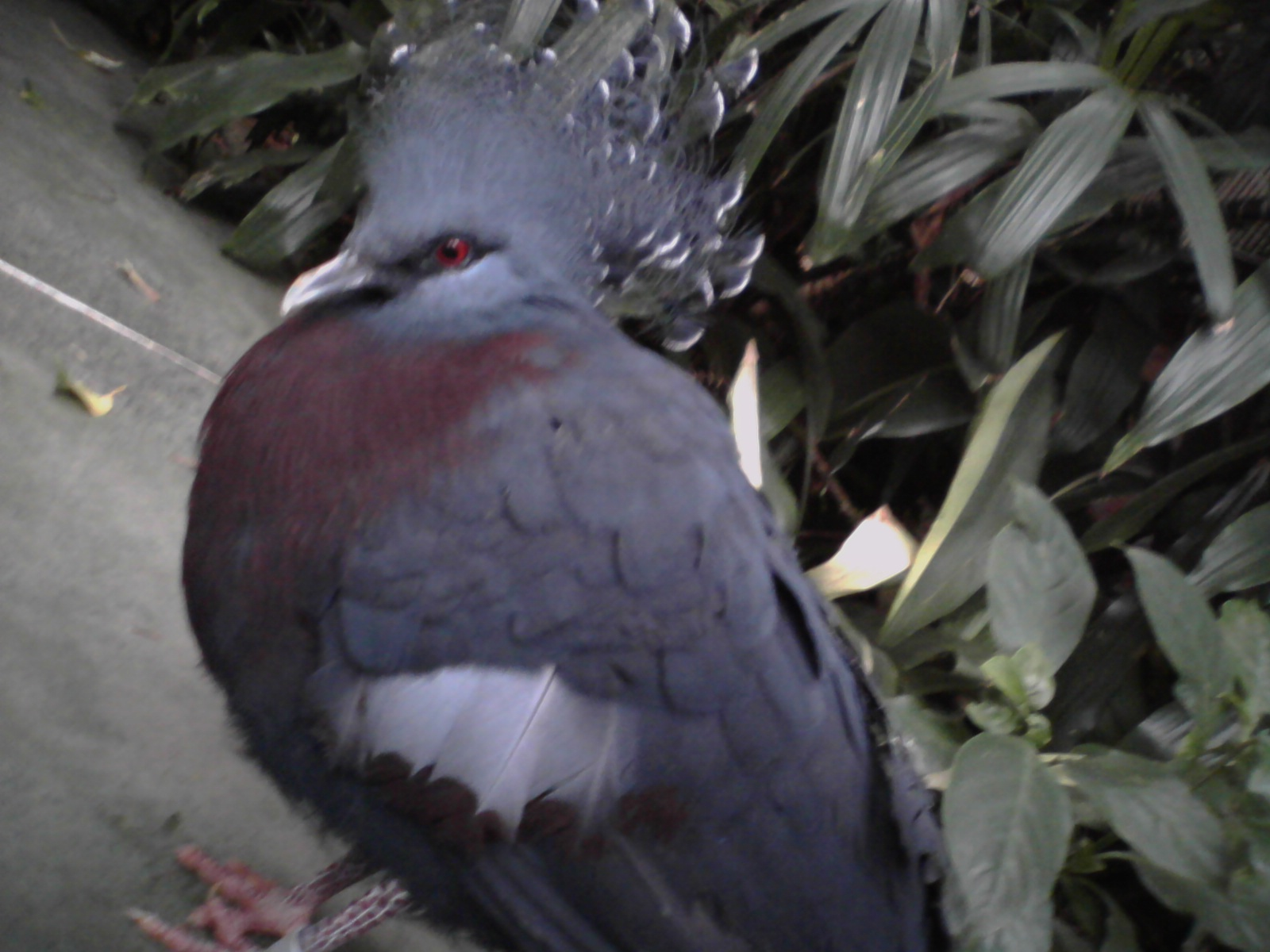 Pittsburgh Aviary Photo 3